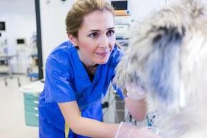 Tierarzt Besserer · Untersuchung