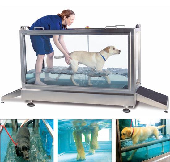 Tierarztpraxis Besserer: Physiotherapie