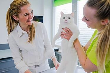 Tierarztpraxis Besserer: Dr. med. vet. Katerine Besserer bei der Behandlung einer Katze