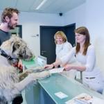Tierarztpraxis Besserer: Empfang beim Termin
