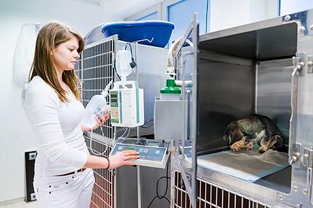 Tierarztpraxis Besserer: Käfig in der Aufwachstation