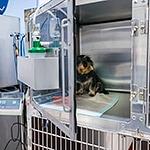 Tierarztpraxis Besserer: Aufwachstation