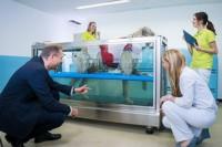 Tierarztpraxis Besserer: Physiotherapie - Unterwasserlaufband