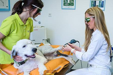 Tierarztpraxis Besserer: Physiotherapie - Lasertherapie