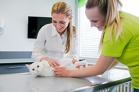 Tierarztpraxis Besserer: Behandlung einer Katze im Behandlungsraum