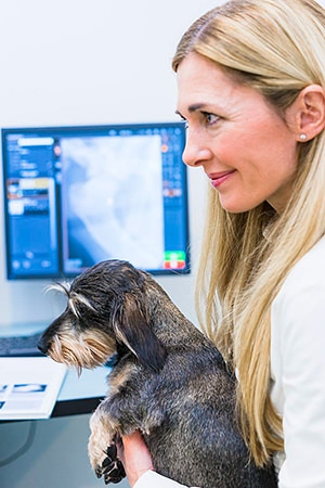 Tierarztpraxis Besserer: Untersuchung eines Hundes im Behandlungsraum