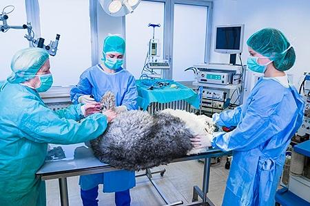 Tierarztpraxis Besserer: Dr. med. vet. Katerine Besserer während einer OP