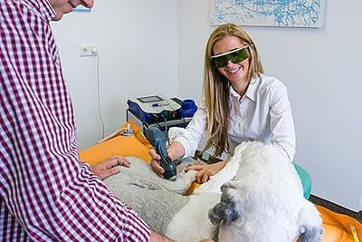 Tierarztpraxis Besserer: Dr. med. vet. Katerine Besserer bei der Lasertherapie an einem Hund