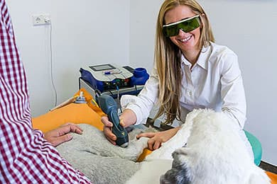 Tierarzt Besserer Physiotherapie Laser